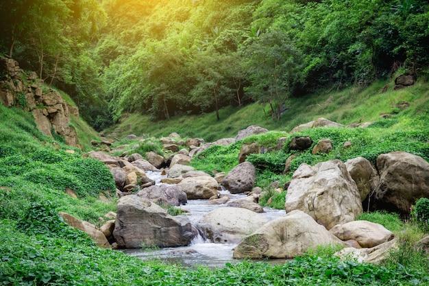 Водопад в джунглях мягкой воды ручья в природном парке Premium Фотографии