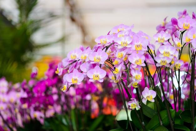Цветы орхидеи на дереве Premium Фотографии