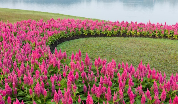 花の庭の背景 Premium写真