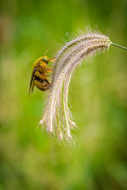 Шмель ловит на цветах траву Premium Фотографии