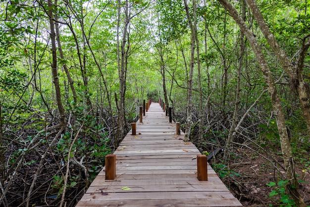木製の方法で森の美しい風景 Premium写真
