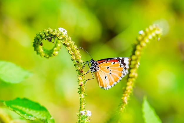 蝶が食べている Premium写真
