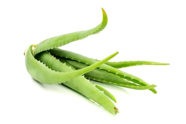 白背景にアロエベラ植物。アロエベラは皮膚治療として伝統的な医学で使用されています。 Premium写真