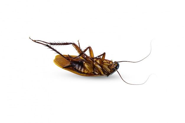 白で隔離される死んだゴキブリ仰向け Premium写真