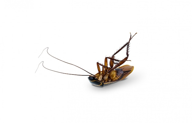 分離された死んだゴキブリ仰向け逆さま Premium写真