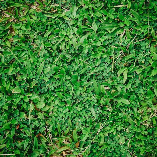 Натуральная зеленая трава фон с марочных фильтра Premium Фотографии