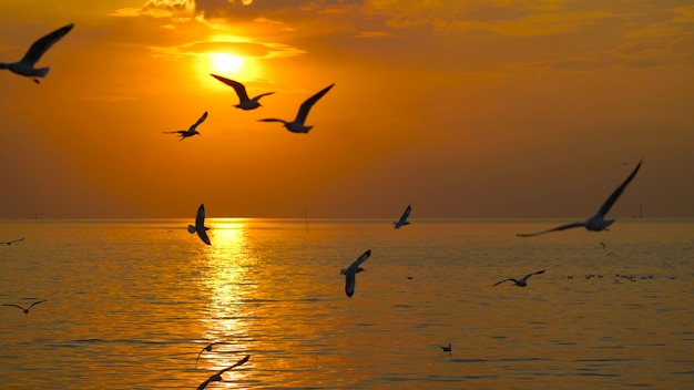日没時には多くのカモメが海の上空に飛んでいます。 Premium写真