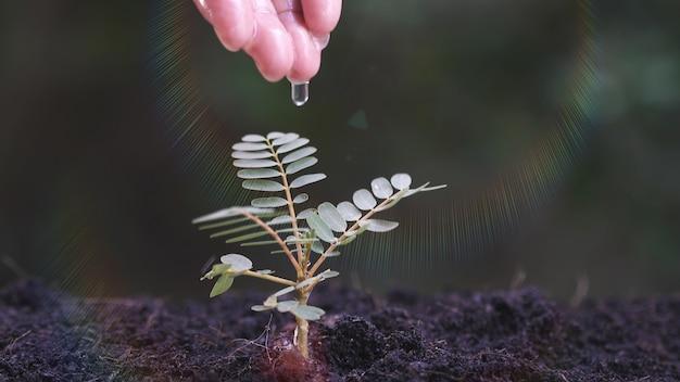 小さな植物に水をまく女性の手 Premium写真
