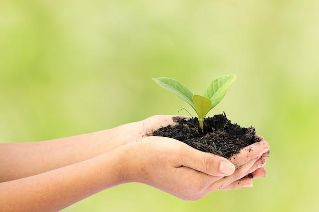 小さな緑の木の植物を持つ女性の手 Premium写真
