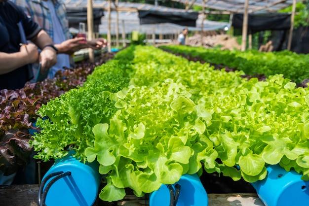 Владелец гидропонной фермы, проверка рн воды и температуры сельскохозяйственной среды растет концепция. Premium Фотографии