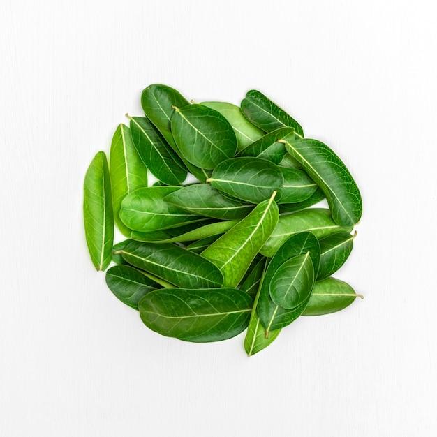ベンガルスグリの白いウッドの背景の葉。 Premium写真
