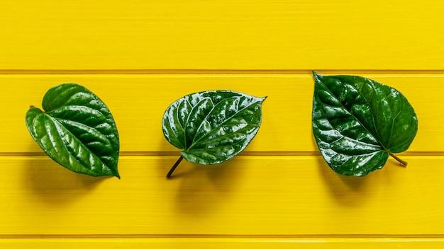 黄色の木の上の緑のパイパーベレー葉。 Premium写真
