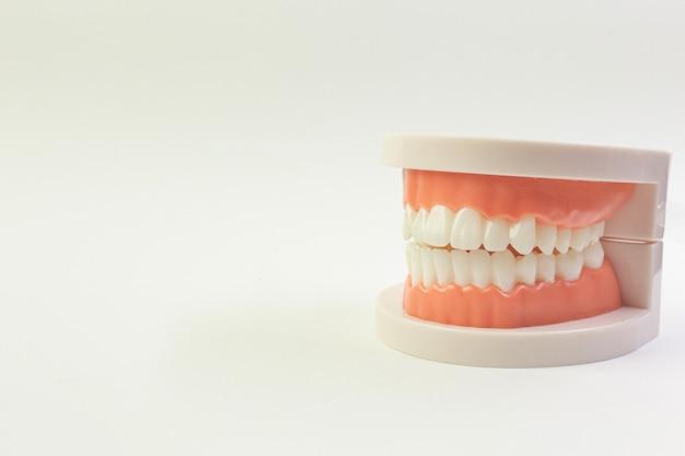 Модель зуб на белом фоне для стоматологического содержимого. Premium Фотографии