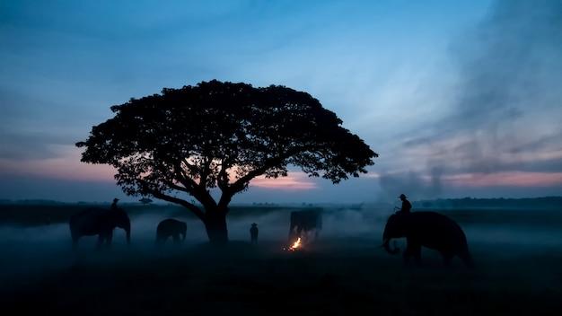タイの田舎;スリンタイの夕日、象タイの背景にシルエット象。 Premium写真