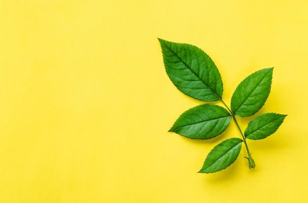 緑の葉の質感。葉のテクスチャ背景 Premium写真