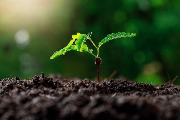 肥沃な土壌で育つ若い植物。 Premium写真