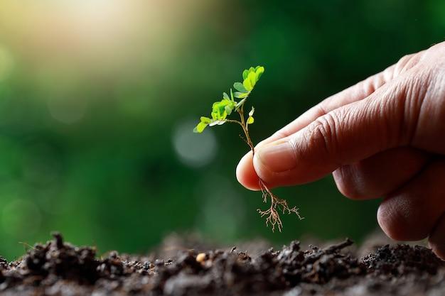農家の手が肥沃な土壌にもやしを植えます。 Premium写真