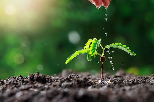 若い赤ちゃんの植物に水をまく農家手 Premium写真