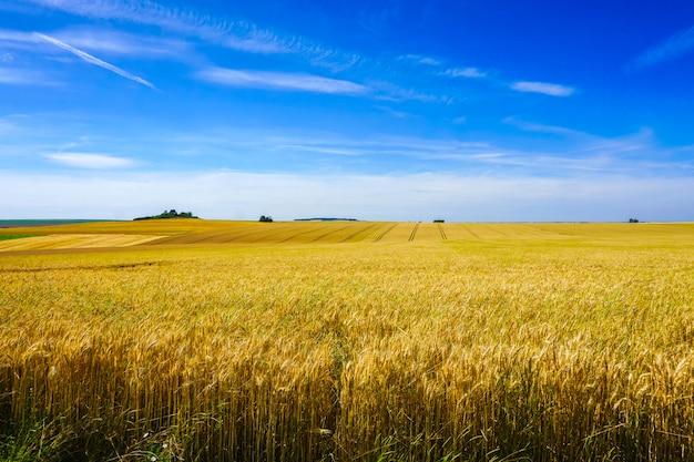 フランスの晴れた日に畑と緑の丘の景色 Premium写真