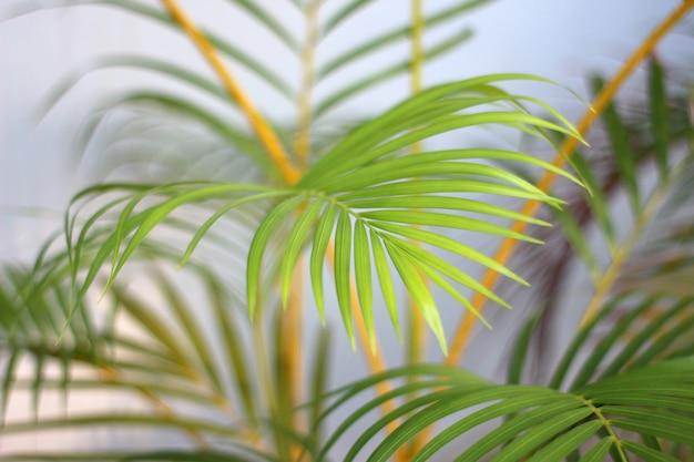 白い壁に影を持つ緑の熱帯ヤシの葉 Premium写真