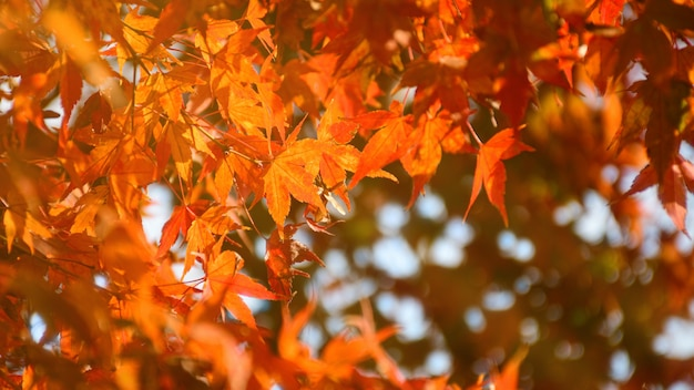 暖かい秋の太陽の光と秋の背景。 Premium写真