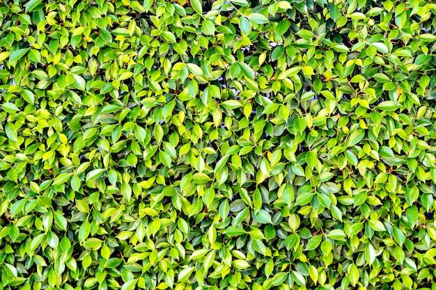 自然の背景に小さな緑の葉の木 Premium写真