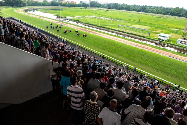 Скаковая лошадь и жокей прыгают через препятствие Premium Фотографии