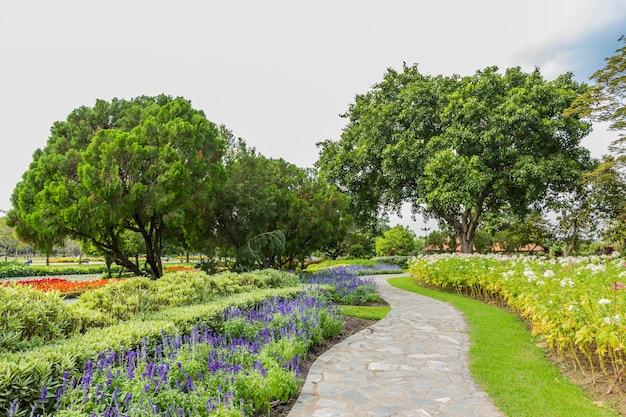 木と芝生の公園 Premium写真