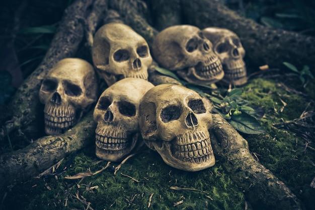 Натюрморт с человеческим черепом на корнях Premium Фотографии