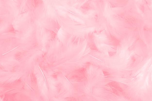 背景としてピンクの羽の質感。 Premium写真