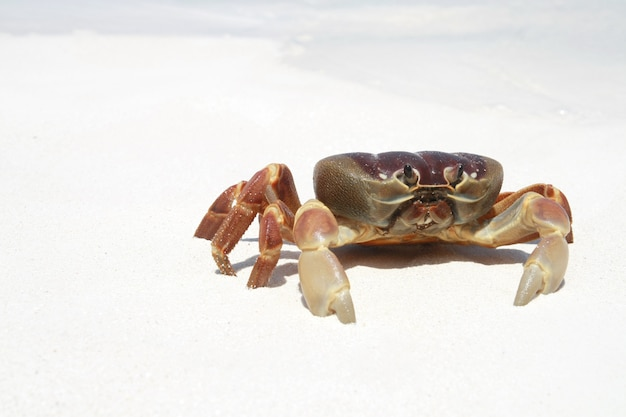 Краб на пляже, таиланд Premium Фотографии