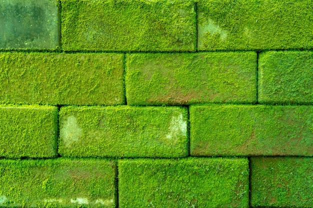 苔、背景を持つ古代のレンガの壁カバー Premium写真