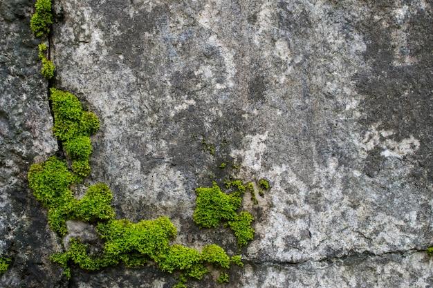 岩の上のコケ。 Premium写真
