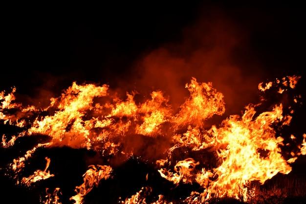 暗闇の中で火の炎 Premium写真