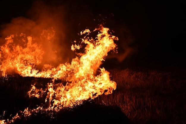 抽象的な背景のための暗闇の中で火の炎 Premium写真