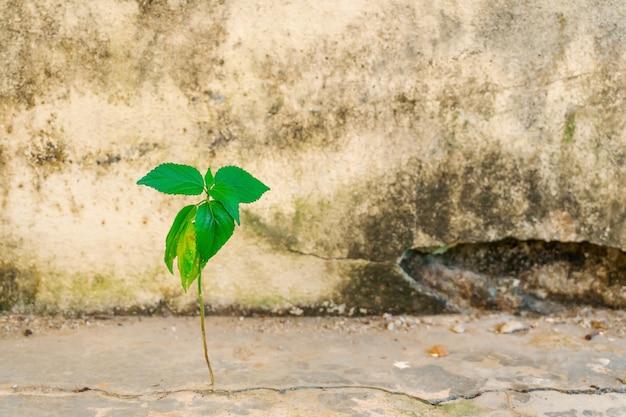 セメントクラックコンクリート上に成長している木の葉 Premium写真