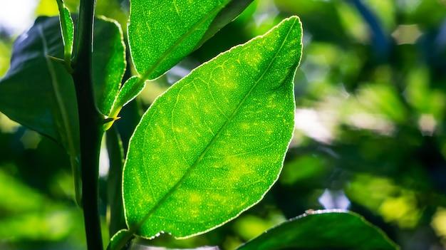 ぼやけた影と緑の葉 Premium写真