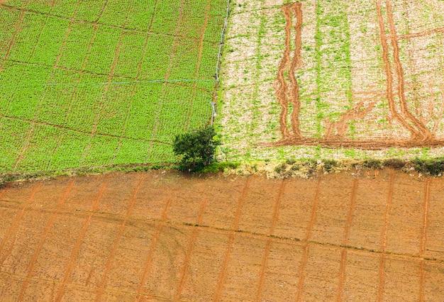 上面図。日没で彼のトウモロコシ畑に立っている農夫 Premium写真