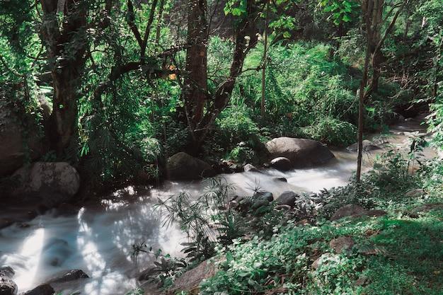 自然公園のストリームの軟水、熱帯雨林の美しい滝 Premium写真