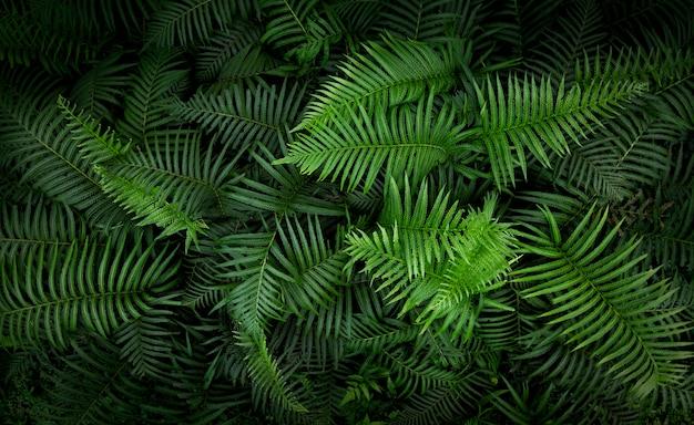 熱帯シダの葉、ジャングルの葉緑パターン背景。 Premium写真