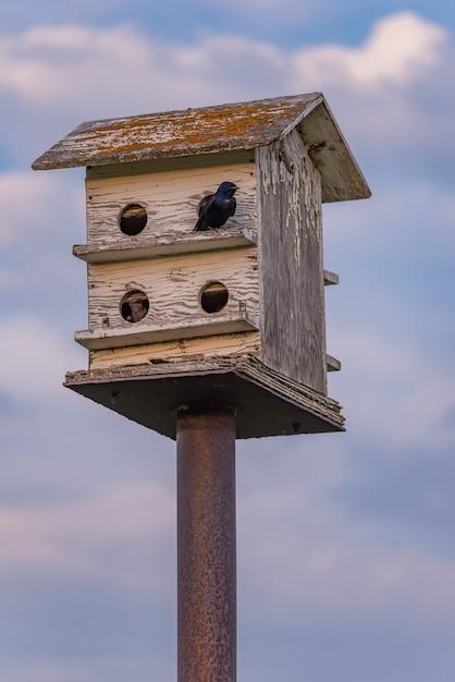 青い空と雲と木の巣箱の上に腰掛けて鳥 Premium写真