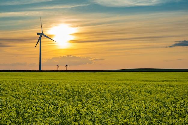 カナダ、サスカチュワン州の大草原のキャノーラ畑の風力タービンに沈む夕日 Premium写真