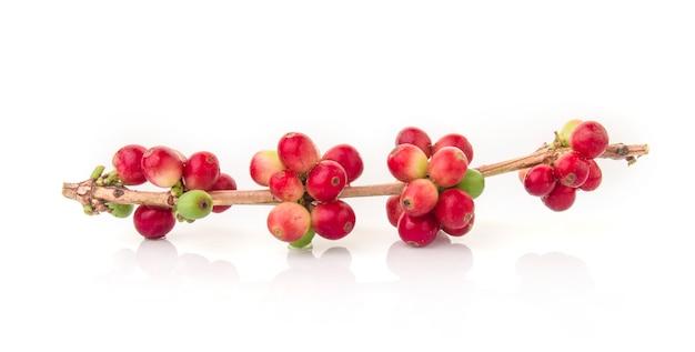 白の葉と新鮮なコーヒー豆 Premium写真