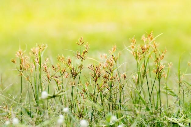 Крупным планом зеленых листьев на размытом фоне в саду Premium Фотографии