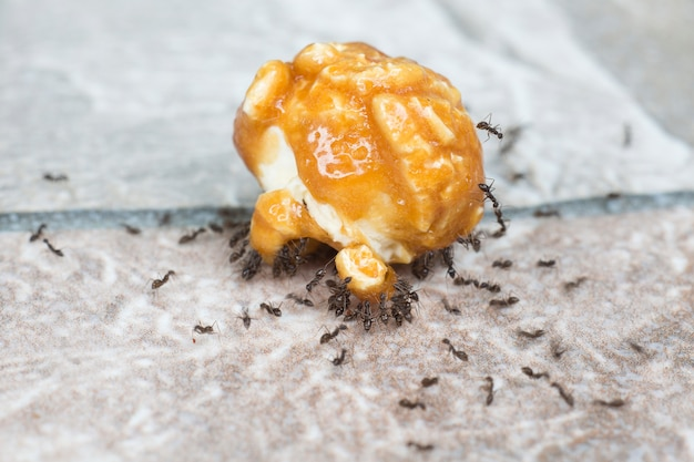 チームワークのコンセプト、アリはポップコーンカラメルから砂糖を食べる。 Premium写真