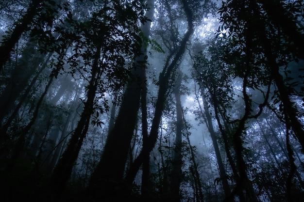 怖い森の中の植物のシルエット Premium写真