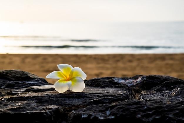 石の上のプルメリアの花 Premium写真
