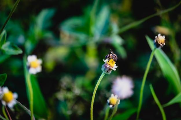 草の花に蜂。 Premium写真