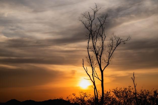 日没時の枯れ木のシルエットの美しい風景の画像 Premium写真
