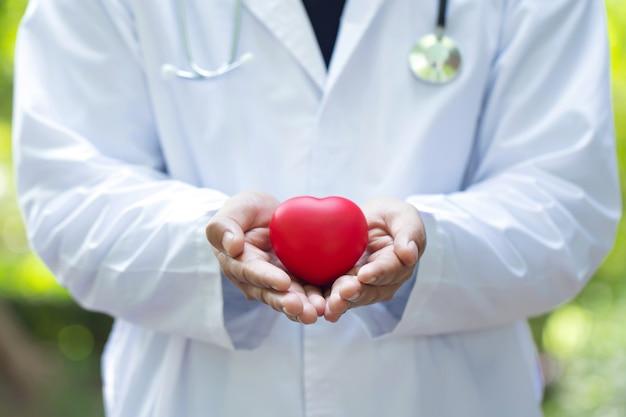 Доктор держа и заботясь красное сердце в двух руках Premium Фотографии